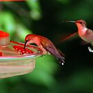 Hummers! by Ruth Lambert