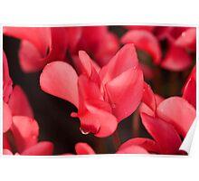 Intense Blooms Poster