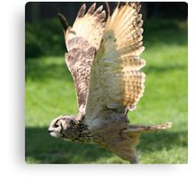 Flying Bengal Eagle Owl Canvas Print