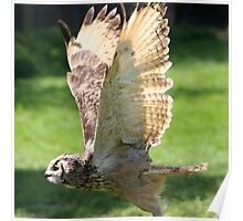 Flying Bengal Eagle Owl Poster