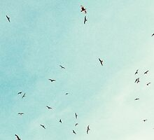Free Birds in Blue Sky by elenor27