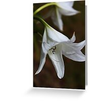 Beauty In White Greeting Card