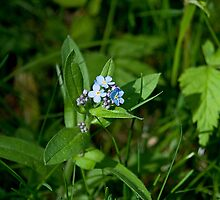 Forget-Me-Not by Mike Oxley