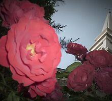 Roses Surround St. Mark's in-the-Bowery by MeBoRe