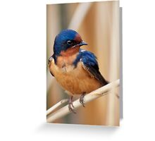 Barn Swallow in an Ontario Marsh Greeting Card