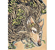 The Dog of the Mountain - Honshu wolf Photographic Print