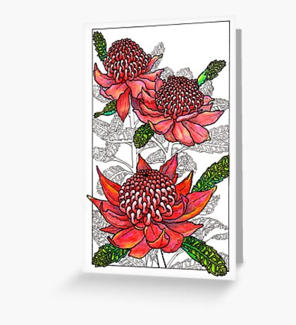 Australian Flower Series - Waratah Colour Greeting Card