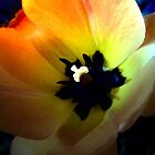 Multicolored Tulip by Elizabeth Bennefeld