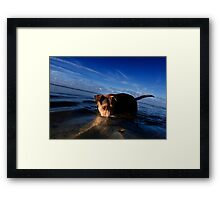 Paws playing Jaws Framed Print