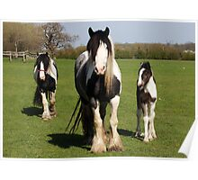 Horse Family Poster