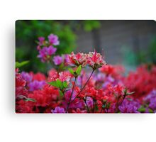 Korean Wild Flowers Canvas Print