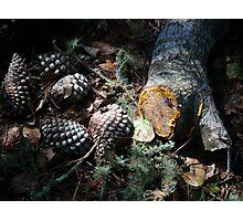 Woodland Textures Photographic Print
