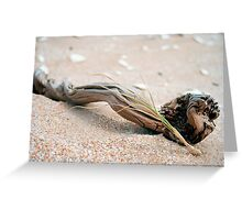 driftwood & grass (The Coorong) Greeting Card
