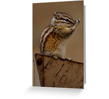Baby Chipmunk Greeting Card