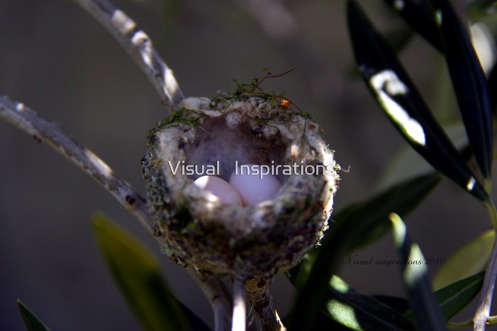 Hummingbird Nest by Visual   Inspirations
