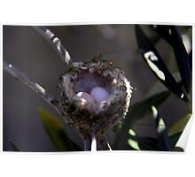 Hummingbird Nest Poster