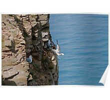Boulby Cliff Poster