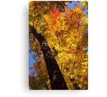 Autumn Foliage Delight In Vivid Yellow, Red And Orange Canvas Print