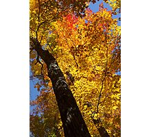 Autumn Foliage Delight In Vivid Yellow, Red And Orange Photographic Print