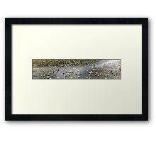 Cub Lake, Rocky Mountain National Park Framed Print