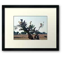 Goats in the Trees Framed Print