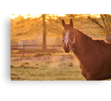 Good Morning Whiskers! Canvas Print