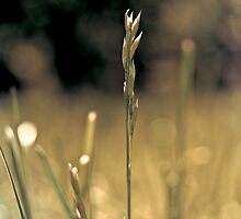 RI grass by Jennifer Muller