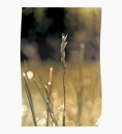 RI grass Poster
