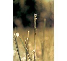 RI grass Photographic Print