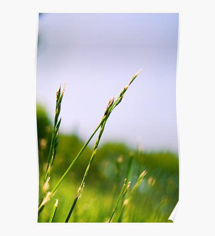 RI grass II Poster