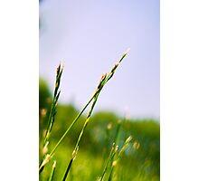 RI grass II Photographic Print