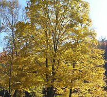 Autumn by KaytLudi