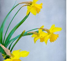 Daffodils with Raindrops by Diane Schuster