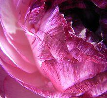 ranuncular by Floralynne