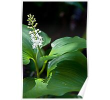 False Lily of The Valley Poster