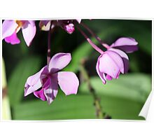 Hanging Blossoms Poster