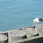 San Francisco Seagull by jdbussone