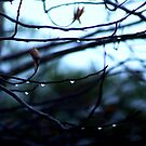 Listen, listen to the falling rain...  by meowiyer