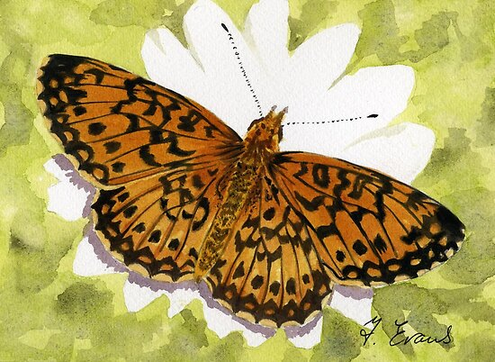 Fritillary Butterfly by FranEvans