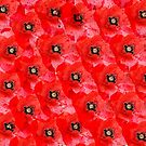 Lots of Poppies by walstraasart