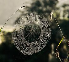 Nature's Doily  by Beth  Wode