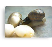 Snail #4 Metal Print