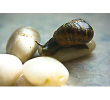 Snail #4 Photographic Print