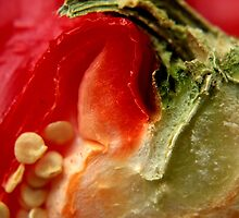 Capsicum by growtograph