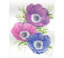 Anemones on White Poster
