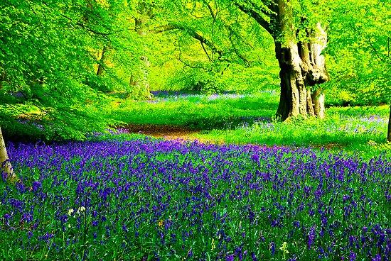 Bluebell Wood - Thorpe Perrow #2 by Trevor Kersley