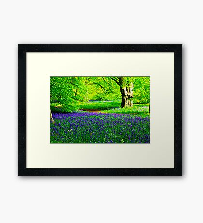 Bluebell Wood - Thorpe Perrow #2 Framed Print