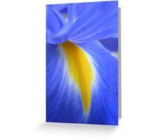 dutch iris I Greeting Card