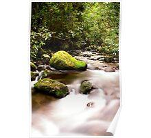 Pirongia nature walk Poster