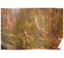 Water on a web Poster
